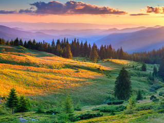 Wall Mural - Beautiful summer landscape in the mountains. Sunrise