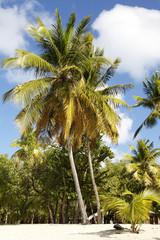 tropical beach in Carribean