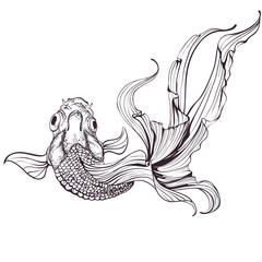 Goldfish sketch on white background