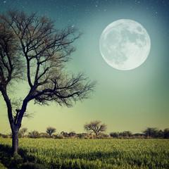 Papiers peints Pleine lune Nature-68