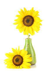 Bright sunflowers in vase isolated on white
