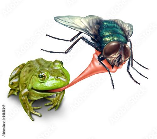 лягушки ловить насекомых