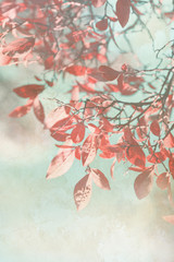 Beautiful grunge autumnal background