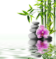 Wall Mural - purple orchid flower end bamboo on water