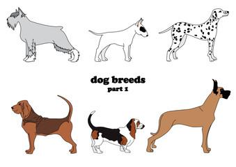 dog breeds part 1