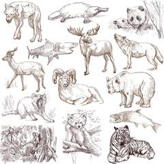 Animals around the world (collection no.2, white )