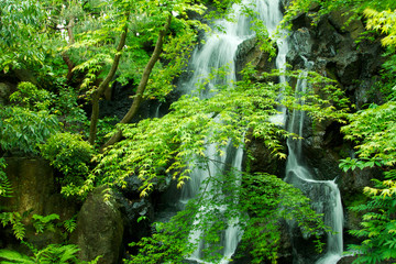 Wall Mural - 日本庭園の滝