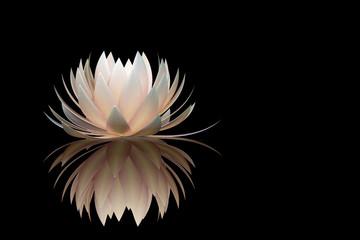 lotus flower on a black background Fototapete