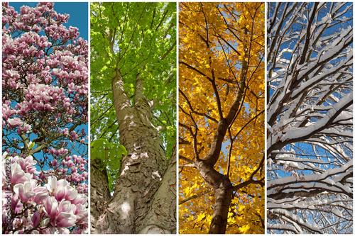 Vier Jahreszeiten Stockfotos Und Lizenzfreie Bilder Auf Fotoliacom