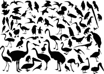 large set of different bird silhouettes on white