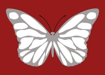 Malalachite butterfly