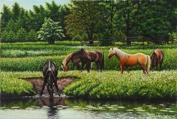 Pferde am Fluß