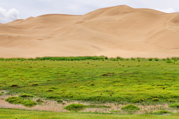 The Gobi Desert, Mongolia