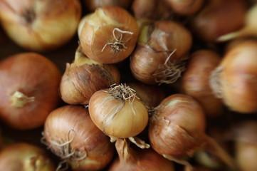 onions (1)