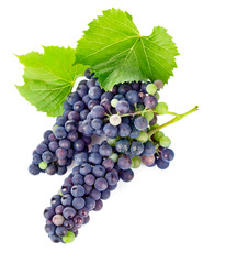 fresh grapes wine with green leawes isolated on white background