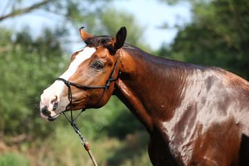 Portrait of nice wet horse