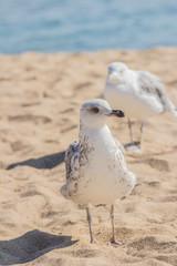 Gull on beach