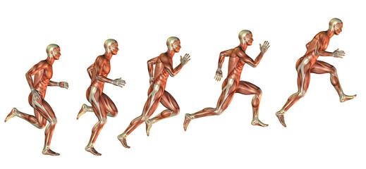 Wall Mural - Muskelstudie beim Ansatz zum Sprung