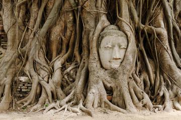 Old tree with buddha head in Ayutthaya