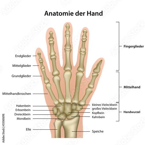bones deutsch