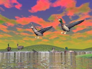 Mallard duck scenery - 3D render