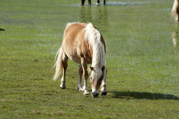Horse in Castelluccio di Norcia plateau
