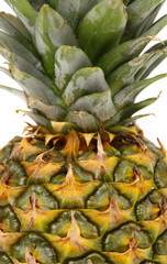 Top of pineapple.