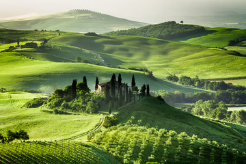 Foto op Canvas Toscane Farm of olive groves and vineyards