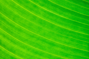 Wall Mural - leaf abstract
