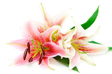 Wall Mural - lily