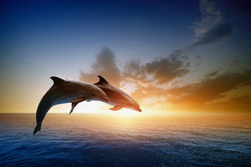 Photo sur Plexiglas Dauphin Dolphins jumping