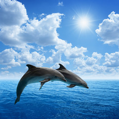 Canvas Prints Dolphins Dolphins jumping