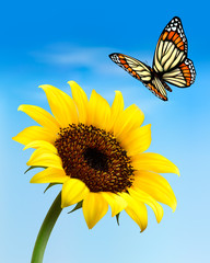 Wall Mural - Nature background with sunflower and butterfly. Vector illustrat
