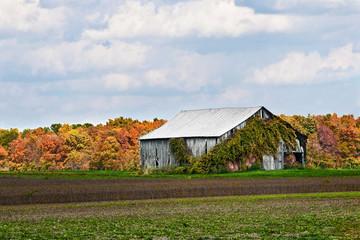 Old Barn in Field in Autumn