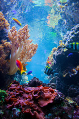 Underwater scene with fish, coral reef