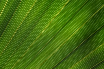 Structure of a palm leaf