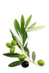 Ramo di ulivo con foglie e olive
