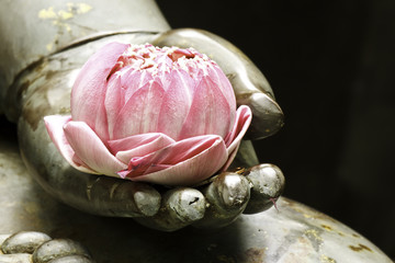 Photo sur Plexiglas Buddha pink lotus in hand of buddha