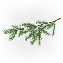 01_Christmas tree branch