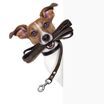 dog with leather leash