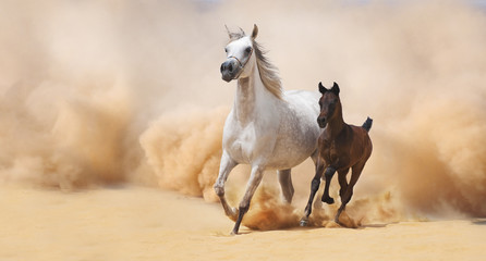 Arabian Mare and foal galloping in desert