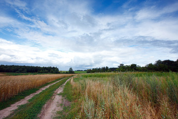 Landscape with road and field of wheat