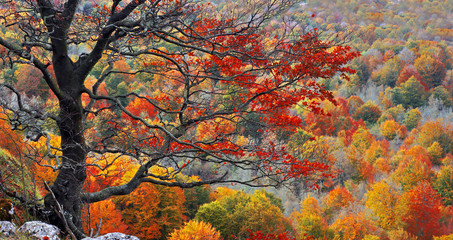 Wall Mural - tree on a cliff with autumn colors