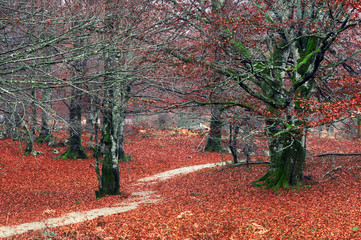 Wall Mural - pathway in autumn forest