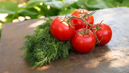 Fresh vegetables on garden background