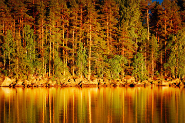 Reflection of pines in water at sunset