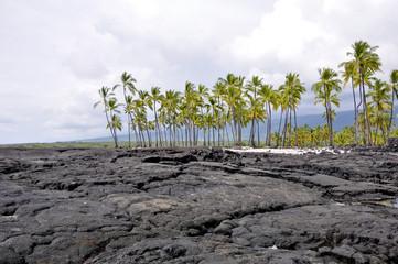 Palm trees at Pu'uhonua O Honaunau National Park (Hawaii)