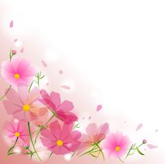 秋桜 花 ピンク 秋 季節 コスモス フレーム
