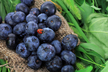 Blueberries on sackcloth on grass