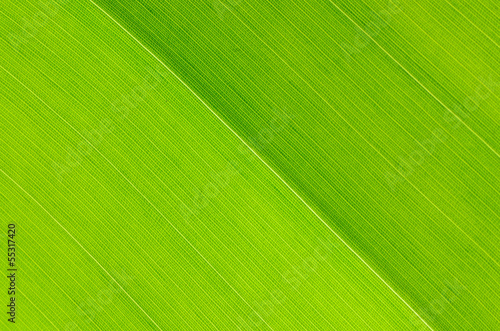 Wall mural leaf abstract